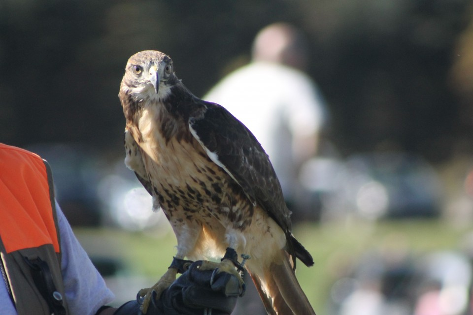Southern Tier Outdoor Show Wilkins RV Falconry